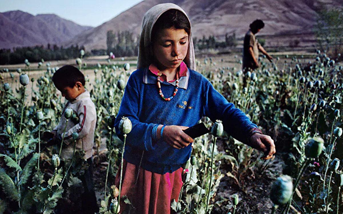 Afganistan'ın en fazla afyon üretimi yapan ili Bedahşan vilayetindeki afyon tarlalarında çalışan çocuklar. 1992.