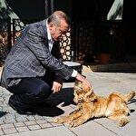 Cumhurbaşkanı Erdoğan'dan hayvan hakları talimatı: Bir an önce çıkartın