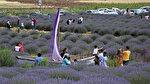 Isparta'nın en güzel özelliği: Lavanta bahçeleri