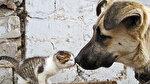 4 Ekim Hayvanları Koruma Günü: 'Haklarını biliyor muyuz?'