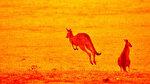 Avustralya'da bulunan Kanguru Adası'nın üçte biri yandı: NASA fotoğrafları yayınladı