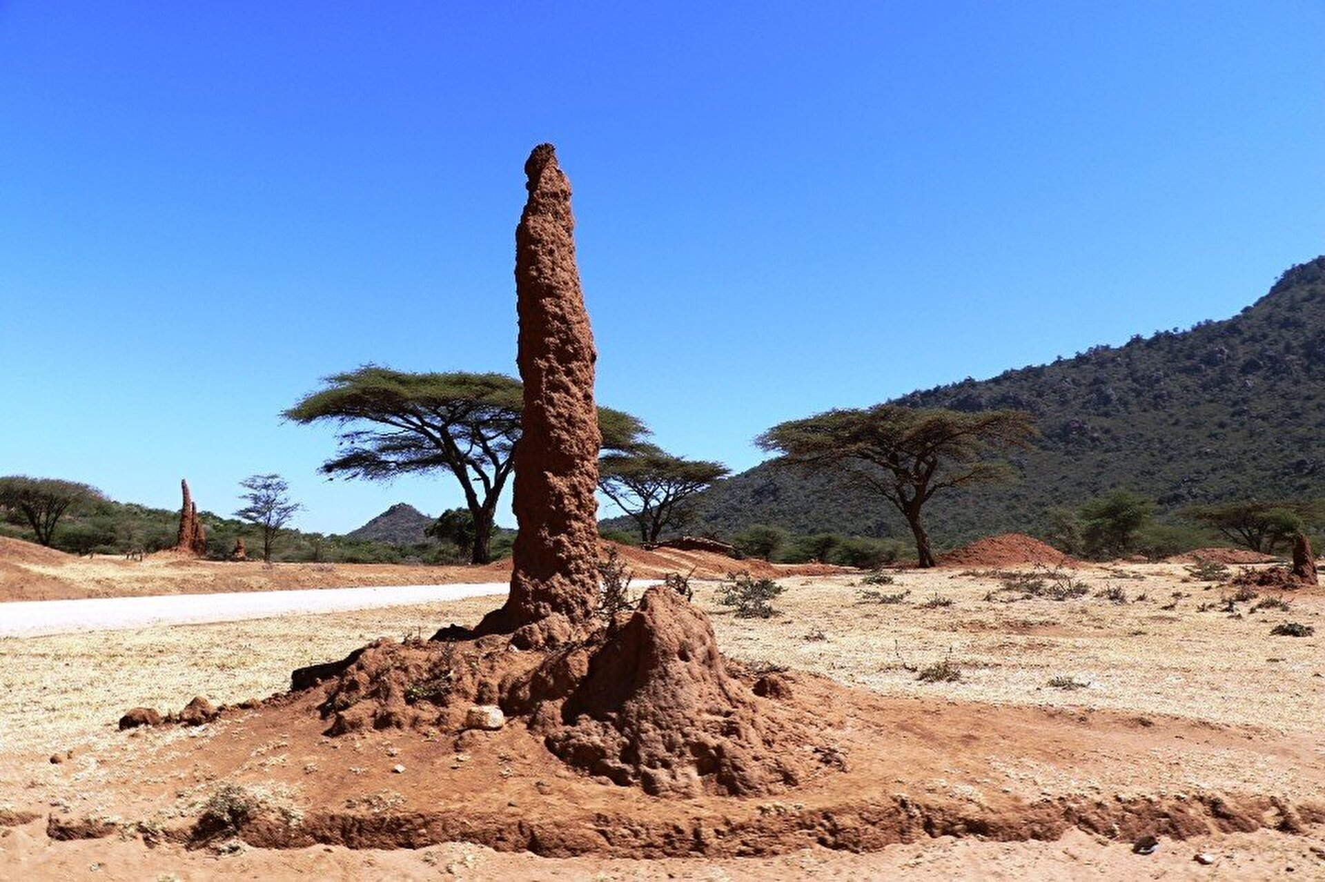 Anthills enthrall tourists in Ethiopia