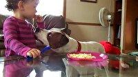 Bebeğin ağzından noodle çalan köpek