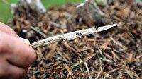 Karıncalar böcekleri yemek için yola düştü
