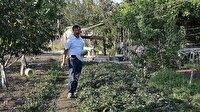 Bir dönümlük hobi bahçesine 42 çeşit ürün sığdırdı