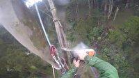 50 metre yüksekte ağaç nasıl kesilir?