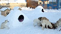 Sokak hayvanları için Eskimo usulü ev