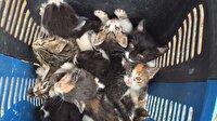60 yavru kedi ormana terk edildi