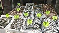 Balık fiyatlarındaki düşüş devam ediyor-Düzce haber