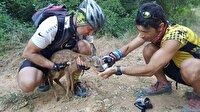 Bisiklet sürücüleri yaralı karacaya can oldu-Edirne haber