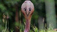'Gülücüklü' yılan sosyal medyada ilgi görüyor