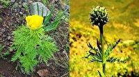 Endemik tür 150 yıl aradan sonra yeniden tespit edildi