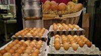 Avrupa'daki böcek ilaçlı yumurta skandalında son durum