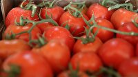 Antalya'dan 30 ülkeye domates ihracatı