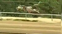 Yarış atı metrelerce uçtu