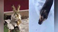 İnanılmaz görüntü: -56 derecede hayvanlar soğuktan taş kesildi!