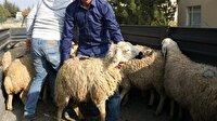 Köyüne döndü 40 koyunu aldı