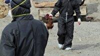 İran'da H5N8 virüsü tespit edildi
