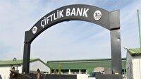 Çiftlik Bank soruşturmasında 2 kişi daha tutuklandı