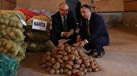 Yerli patates yurt dışına açılıyor