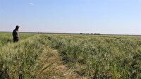 Tarım ve hayvancılığa 180 milyon m2'lik arazi