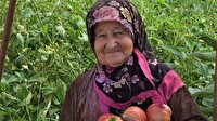 Bilecik'te çiftçi hasattan memnun