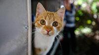 İki öğretmen yaptı karavan kedi evi oldu