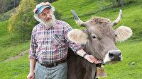 İsviçre sandığa gidiyor: İnek boynuzlu mu olsun boynuzsuz mu