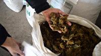Türkiye tarihinde ilk: 1 buçuk ton esrar yakalandı