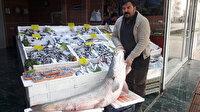 53 kilo ağırlığındaki balığı olta ile yakaladılar