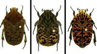 Böcek türlerine Game of Thrones'ten isimler verildi