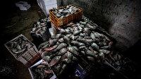 Manyas'tan çıkıyor kilosu 1 lira 30 kuruştan satılıyor