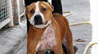 Mersin'de pitbull besleyen kişiye para cezası