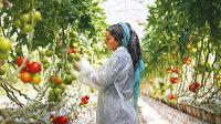 Türk domatesine yoğun talep