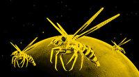 NASA robot arı yaptı: Astronotların peşinden ayrılmayacak