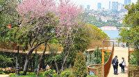Ağaçlar İstanbul'un en eski sakinleri