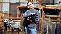 Gazeticiliği bıraktı çoklu doğum yapan koyun yetiştiriyor