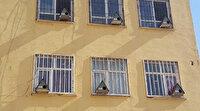 Okulun pencerelerine kuş yuvaları yaptılar