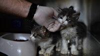 Bursa'da kedilere özel hastane