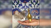 Susuz kalan sokak kedisine zabıta memuru eliyle su içirdi