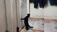 Patisiyle kapı açan kedi sosyal medyada ilgi gördü