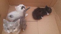Kuyuya düşen yavru kediler kurtarıldı