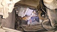 "Makam aracında ""yavru kedi kurtarma"" operasyonu"