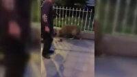 Yerde yatan köpeği tekmeleyen vicdansıza 1763 lira ceza
