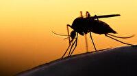 İstanbul'da ortaya çıkan Batı Nil virüsünün nedeni belli oldu