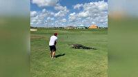 Timsaha aldırış etmeden golf oynamaya devam etti