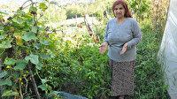 Çin salatalıkları 1 metreye ulaştı: Paniğe kapıldı