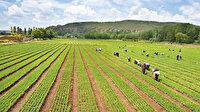 Tarım yeniden canlanıyor