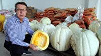 Çiftçilere örnek dev kabaklar yetiştirdi: 60 kilogram ağırlığında
