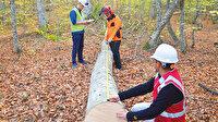 Orman işçisine ormanda sınav